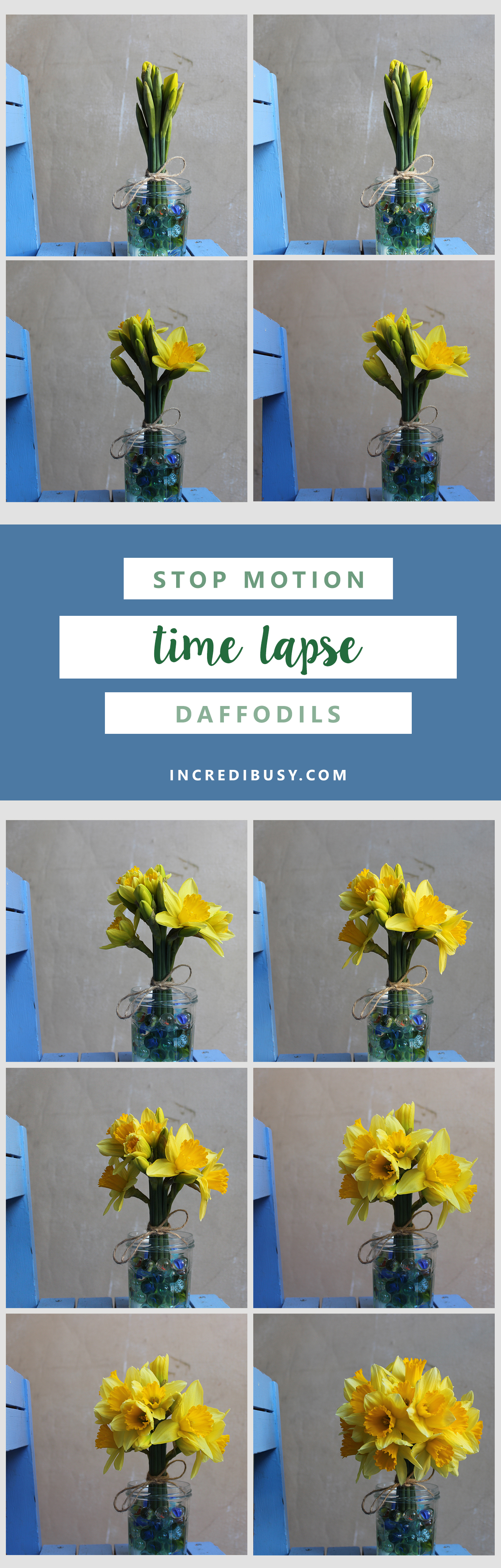 Daffodils-Incredibusy-pinterest