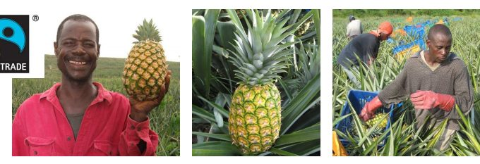 Fairtrade-Pineapple-Photos