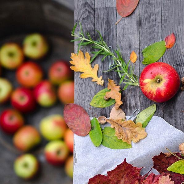 willowday autumn